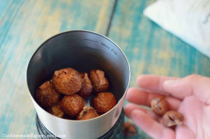 soap nuts for laundry detergent powder your soap nuts